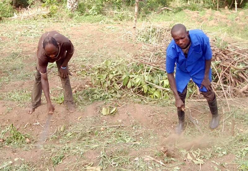 Clearing of Land for Cassava Cultivation